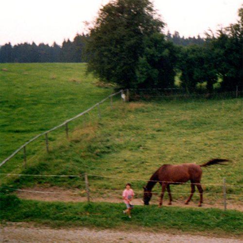 am pferd